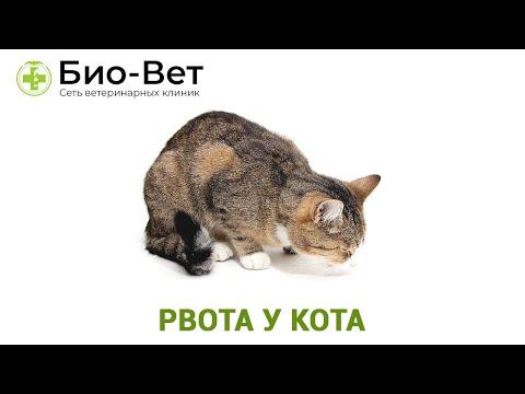 Вопрос: Кот покушает и рыгает. Как лечить?