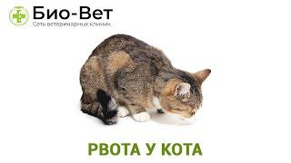 Рвота у кота. Ветеринарная клиника Био-Вет.