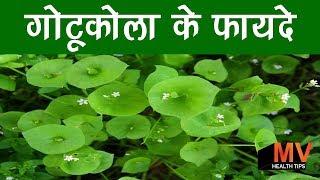 गोटू कोला के फायदे – Gotu Kola Mandukaparni Benefits in Hindi