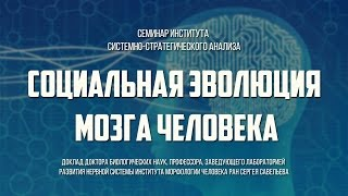 """Сергей Савельев. """"Социальная эволюция мозга человека"""""""