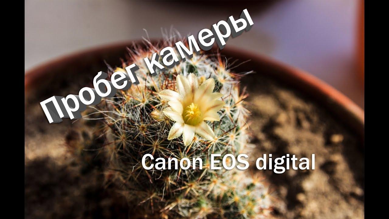 Как узнать пробег фотоаппарата Как узнать серийный номер камеры Canon