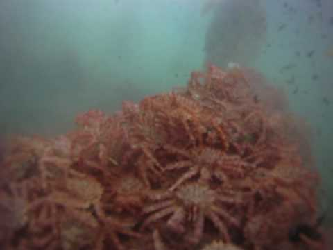 King crab ball in Dutch Harbor