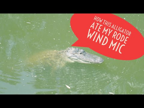 I Survived A Alligator Attack | RIP Rode Mic