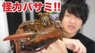 ハサミ襲撃!!生きたロブスターさばいてトマトソース煮を作る!!