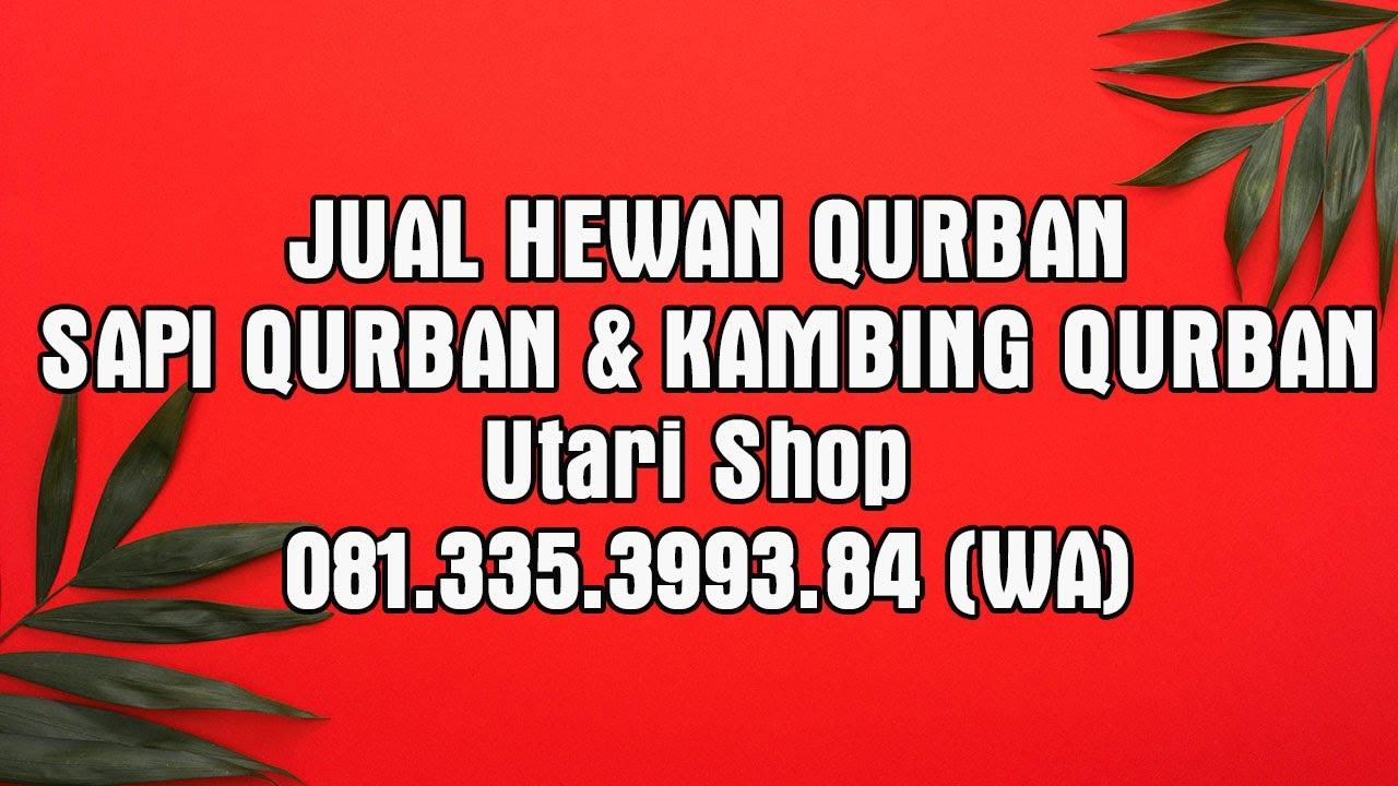 JUAL SAPI dan KAMBING QURBAN Surabaya | Harga Sapi Qurban ...