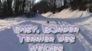 Easy, Border Terrier Des Neiges.