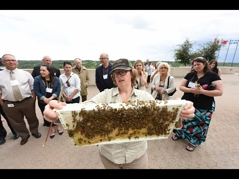 Beekeeping at Edmonton's Shaw Conference Centre