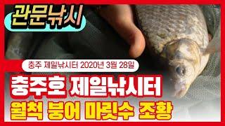 충주호 제일낚시터 월척 붕어 마릿수 조황 2020_03…