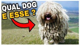 5 Raças de Cachorro Mais Raras do Mundo