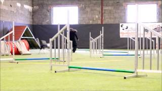 Denver - Best Of Magic Borders 7 Months Agility