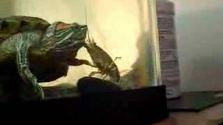 Turtle Vs Crayfish Prt 3