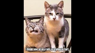 funny cat farts funny cat ecards free