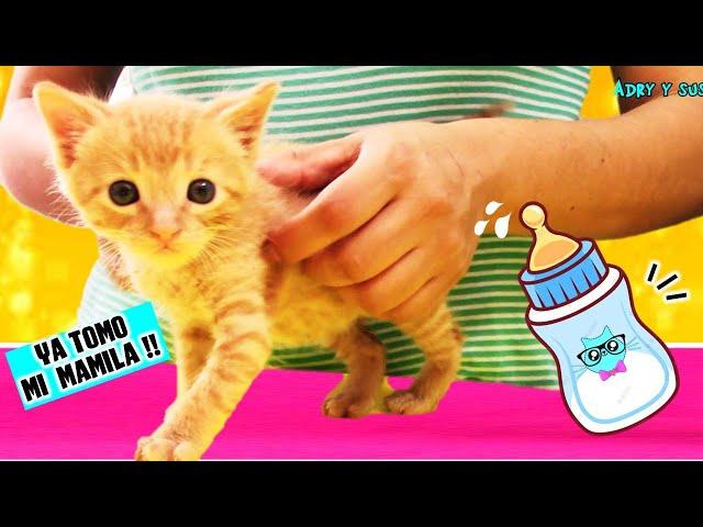 Adopté un GATITO Bebe!!  🍼😺 Pte 2