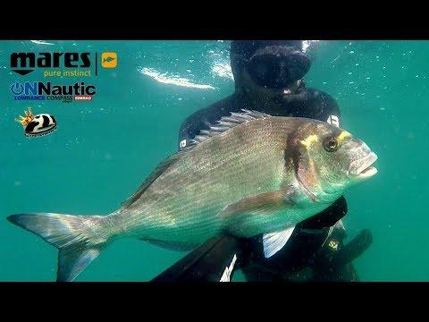 Verano 2017, 1ª parte: Pesca submarina a la espera en el norte.
