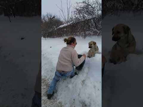 Dog Rescue - how Loreena was found