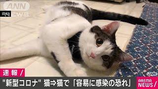 新型コロナがネコからネコに容易に感染 東大など(20/05/14)