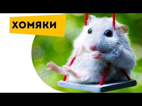 Развивающее видео для детей Животные Хомяк Домашние животные