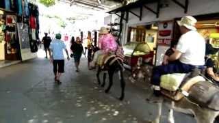 Fat women on donkey