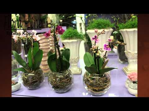 orchideen im glas deko ideen mit flora shop doovi. Black Bedroom Furniture Sets. Home Design Ideas