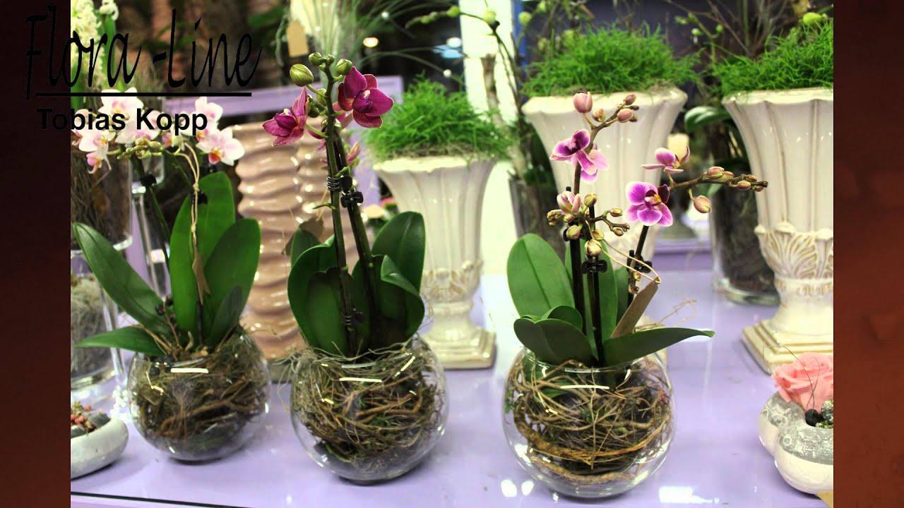 Orchideen Im Glas : sch n nat rlich ausgarnierte orchideen youtube ~ A.2002-acura-tl-radio.info Haus und Dekorationen