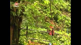 Yalova Termal güzel bir belgeseli