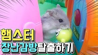 햄스터 장난감방탈출하기!! 장난감들로 꾸며진 방에서 탈출해라!! 최초로 동물이 하는 방탈출! 과연 귀여운 햄스터들은 장난감 방을 탈출 할 수 있을까요?? 호빵 TV