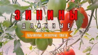 Помидоры Зинины длинные! Пальчиковые засолочные томаты