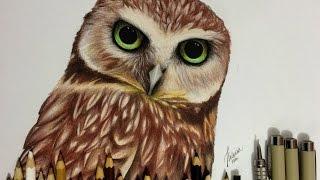 Desenhando Coruja Realista / Drawing Realistic Owl