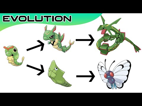 Download Top 20 Pokémon Evolutions You Didn't Know | Max S