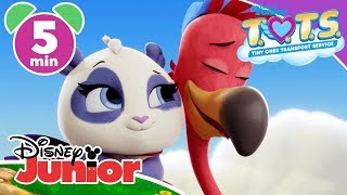 T.O.T.S. | Learning Baby Animals 🐣 | Disney Junior UK