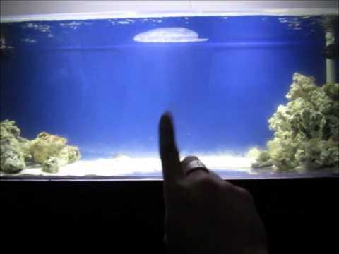 saltwater aquarium fish tank reef living ( Shark tank 3-9 ...