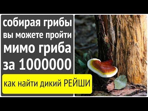 Собирая лесные грибы,