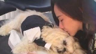 """Repeat youtube video """"อั้ม พัชราภา"""" บินด่วนกลับจากปารีส จัดงานศพสุนัขแสนรัก สดใหม่ไทยแลนด์ ช่อง2"""