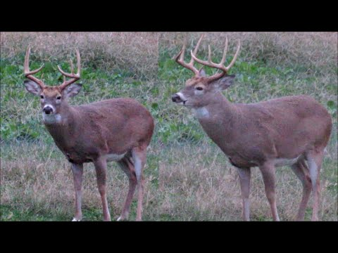 Deer Hunting 2020, First Illinois Sit & 'Lucky 9' Is In Range!