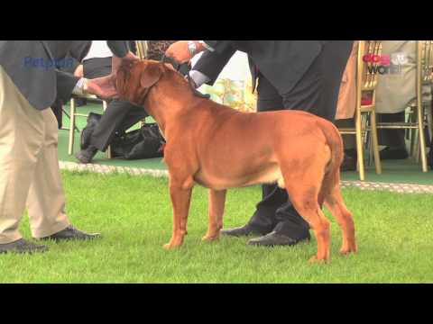 Darlington Dog Show 2015 - Working group FULL