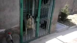 мирон.дом.собака(, 2013-04-20T12:37:48.000Z)