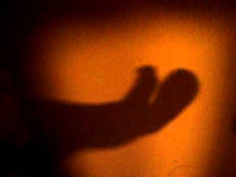 The Alligator Foot.