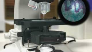 Kohler Illumination - Dr Othon Gervasio - 3D Scientific Animation