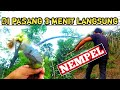 Hunting Catch Birds In Short Time In Forest Mikat Burung Kecil Cuma Dengan Waktu Singkat Petualang  Mp3 - Mp4 Download