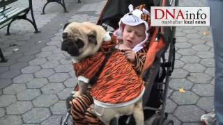 Lions, Ballerinas and Hot Dogs Turn Out for Battery Park City Pet Parade