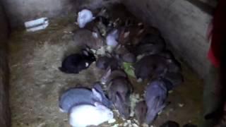 Ямное разведение кроликов первые плоды супер технологии для очень ленивых.(Кто то качает из земли нефть,кто то копает уголь , а я из земли добываю кролятину . Очень простой способ соде..., 2017-01-28T10:16:46.000Z)