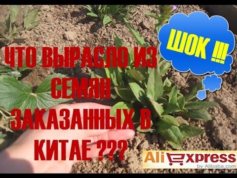 Алиэкспресс цветы семена
