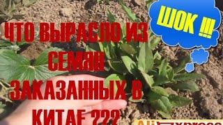ШОК !!! Что вырасло из семян заказанных в Китае на Aliexpress?(, 2014-08-21T11:22:46.000Z)