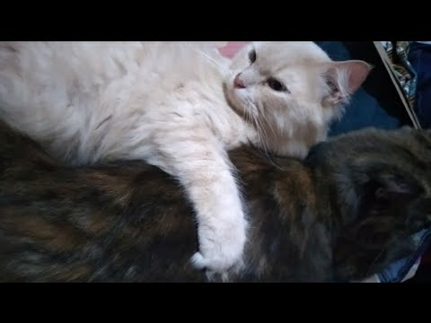 Cute cats couple 😻😻😻😻