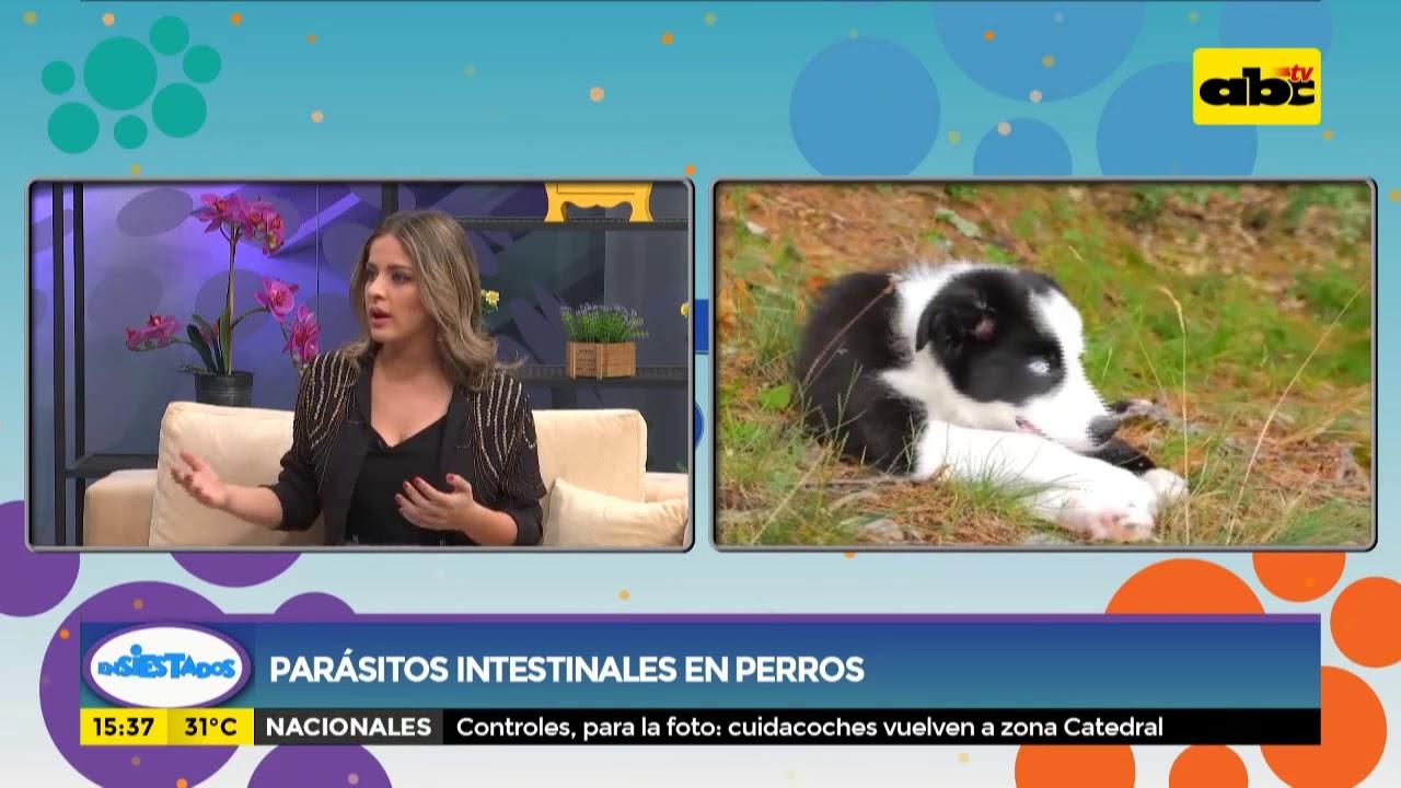 parásitos encontrados en perros