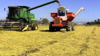 2011 California Rice harvest underway