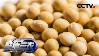 《聚焦三农》 20190916 大豆产业如何突围| CCTV农业