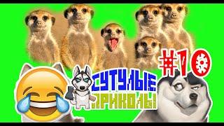 Подборка приколов 2019 - Приколы Сутулые 10 выпуск
