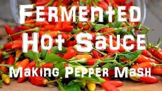 Homemade Tabasco Hot Sauce - Making Pepper Mash - Part 1 Of 2