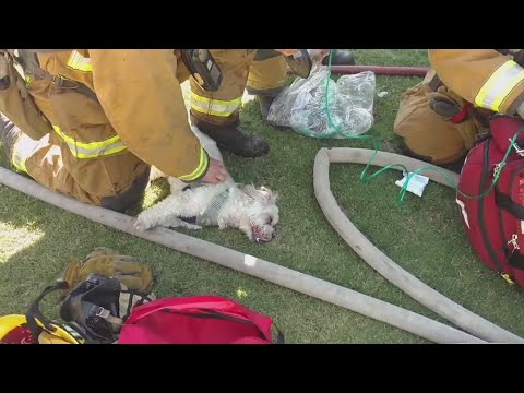 Firefighters resuscitate dog saved from house fire
